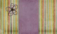purplestripesflower